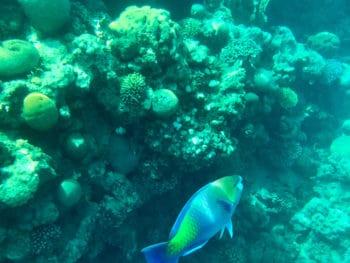 Eilat Snorkeling, Israel