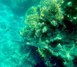Eilat snorkeling