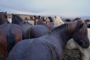 Geysir Herstar , Iceland