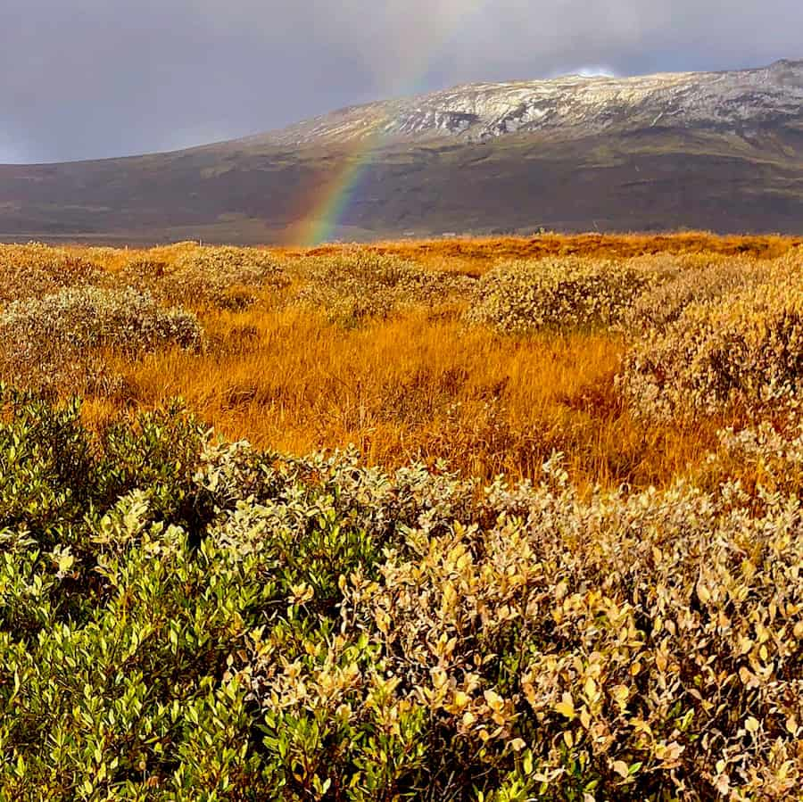 A Last-Minute, 4-Day Trip To Iceland - Five Family Adventurers