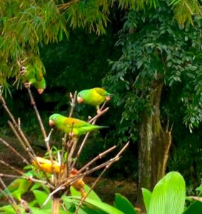 Birds, Costa Rica