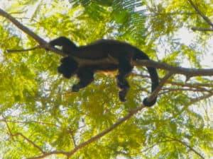 Tortuguero National Park, Costa Rica