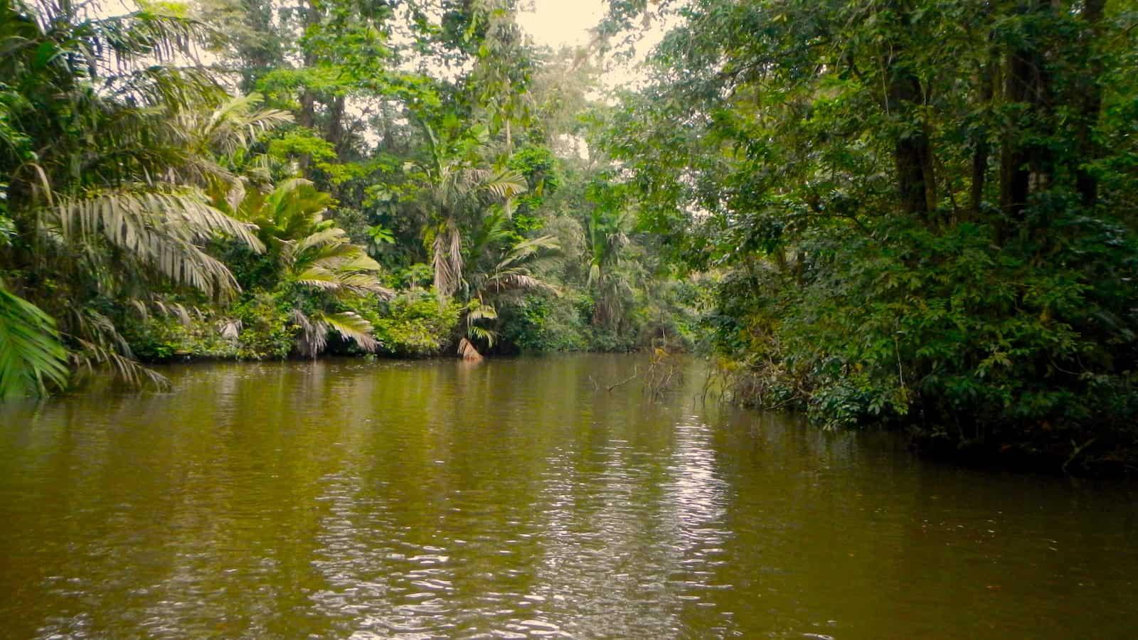Tortuguero Waterway