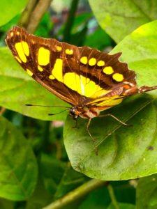El Valle, Butterfly Farm, Panama