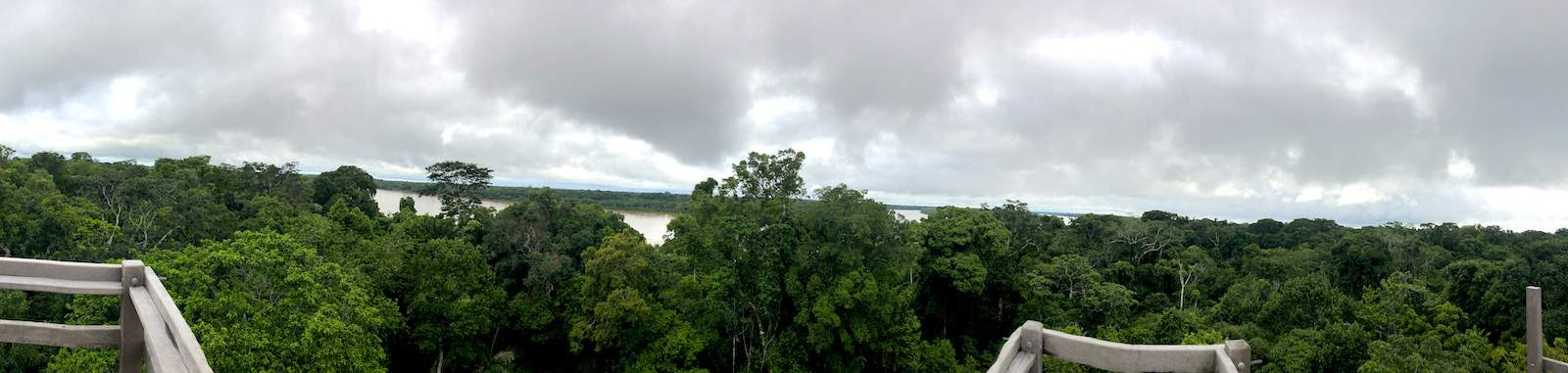Tree top view of Peru Jungle