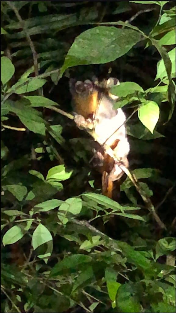 Peru Jungle, night
