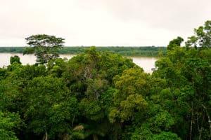Peru Jungle Canopy walk