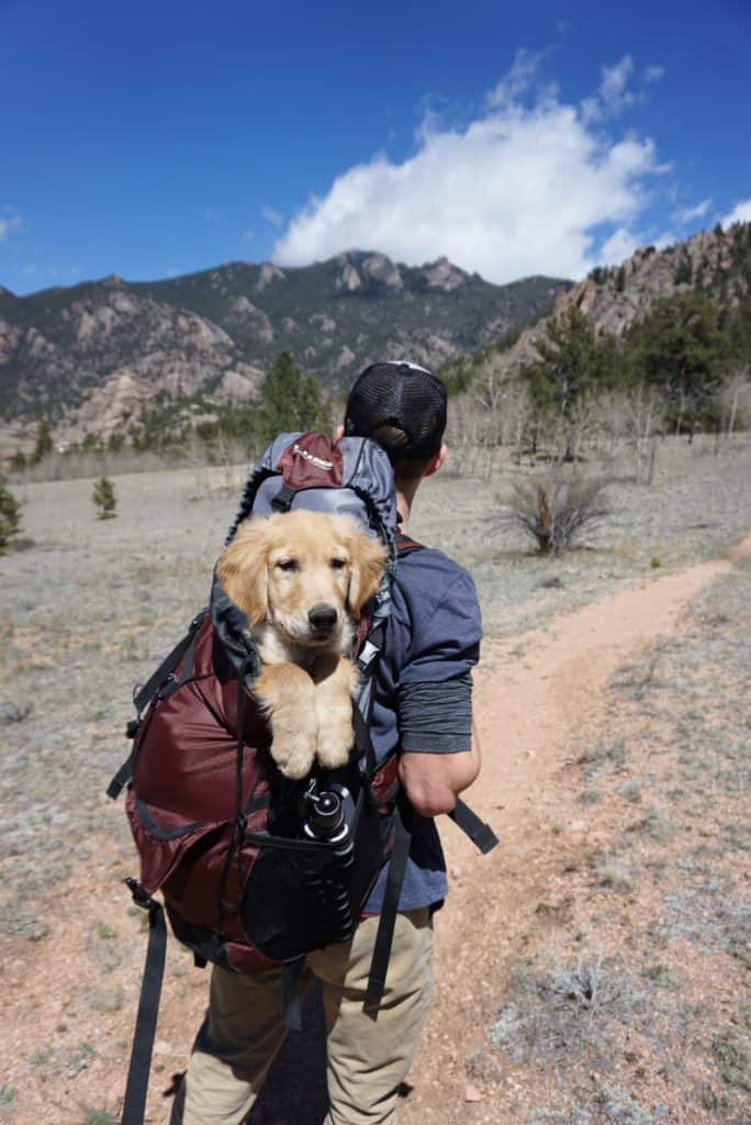 hiker with a dog on back in a backpack