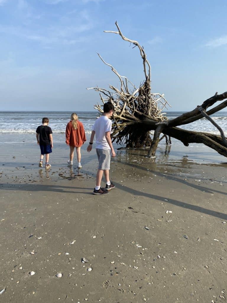 3 kids on the beach observing a dead live oak tree
