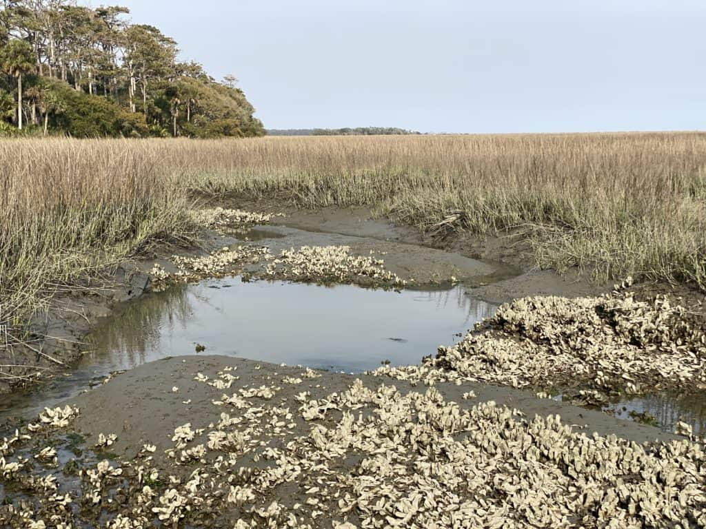 Grass wet-lands in low tide with oyster beds