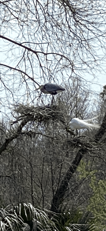 birds in trees in the swamps of South Carolina
