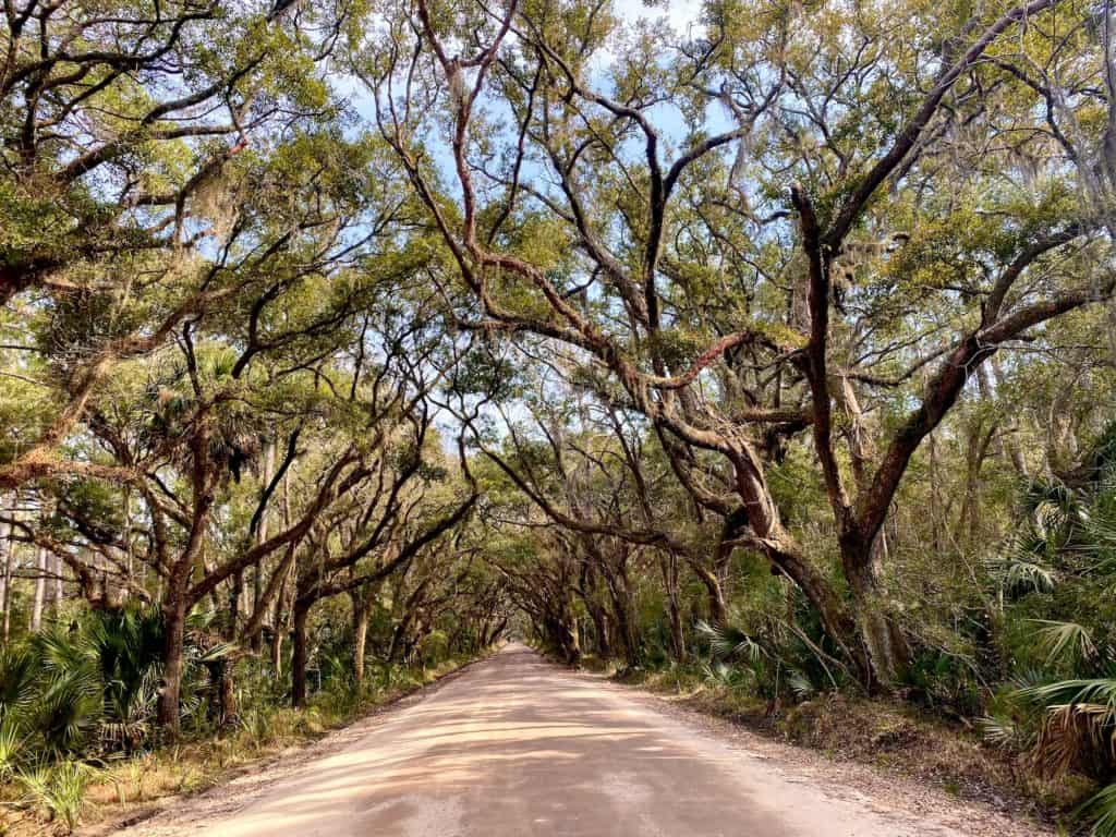 Live oak trees creating a canopy above street