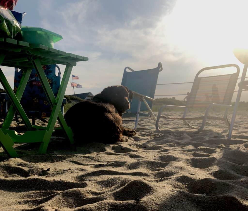 dog lazing on the beach